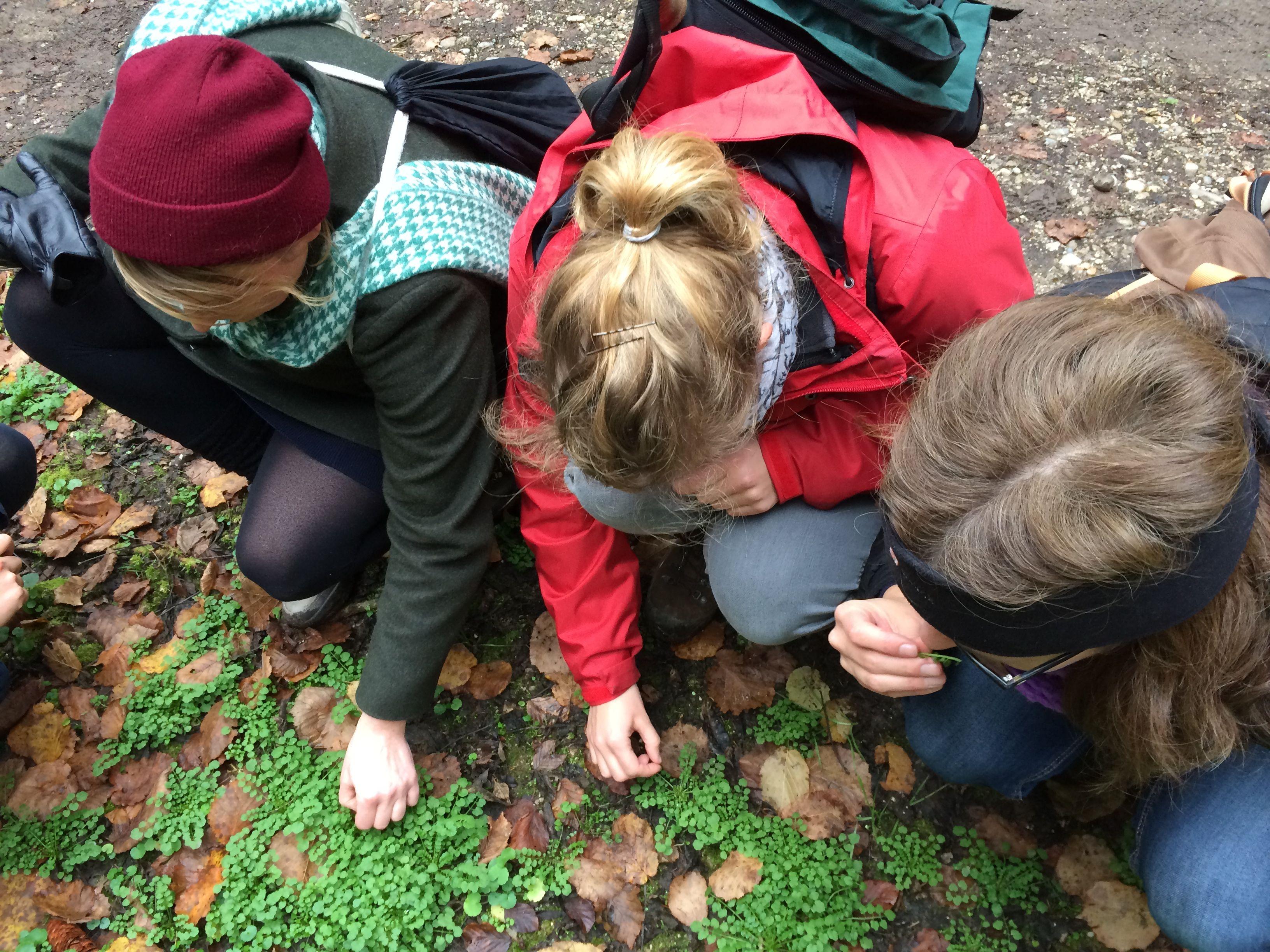 Wildkräuter sammeln - Das mërz punkt Team auf Exkursion